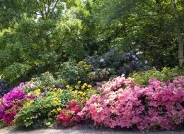 flowerbed001